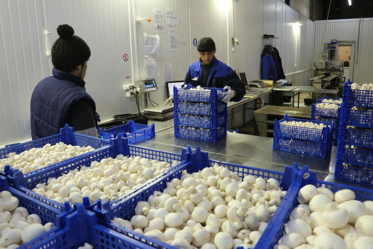 Предприятия по выращиванию грибов в 462